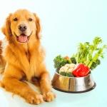 Alimentação vegana para os pets é benéfica?