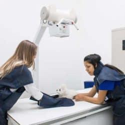 hospital-veterinario-24-horas_clinica-veterianaria-24-horas-14