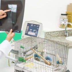hospital-veterinario-24-horas_clinica-veterianaria-24-horas-17