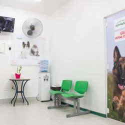 hospital-veterinario-24-horas_clinica-veterianaria-24-horas-4