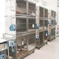 hospital-veterinario-24-horas_clinica-veterianaria-24-horas-6