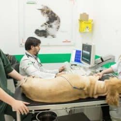 hospital-veterinario-24-horas_clinica-veterianaria-24-horas-8