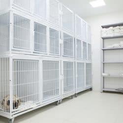 hospital-veterinario-em-sao-paulo-10