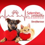 Setembro Vermelho – Dirofilariose