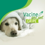 Vacine seu pet contra a Gripe